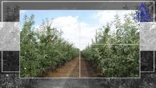 stubovi za voćnjake, vinograde, protivg...