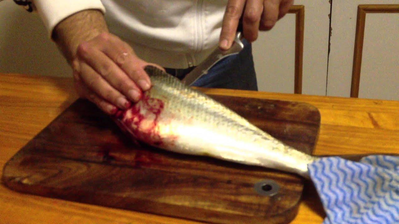 how to fillet a fish youtube