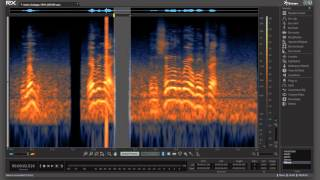 Ambience Match & Spectral Repair in RX 5 Advanced Audio Editor | Before and After Audio Example