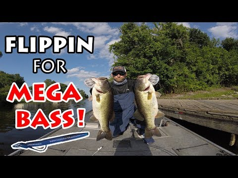 Lake Istokpoga - Flippin For MEGA BASS!!! Tournament Practice Day.