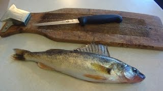 How To #7: Filleting Walleye for Beginners (Regular Fillet Knife)