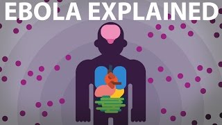 The Ebola Virus Explained - How Your Body Fights For Survival