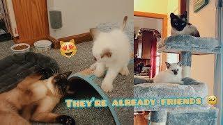 SANSA MEETS ARYA!!! (cat meets kitten vlog!)