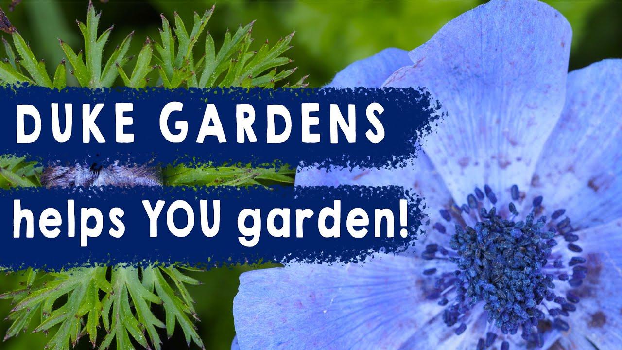 Duke Gardens Helps YOU Garden: A Playlist Intro
