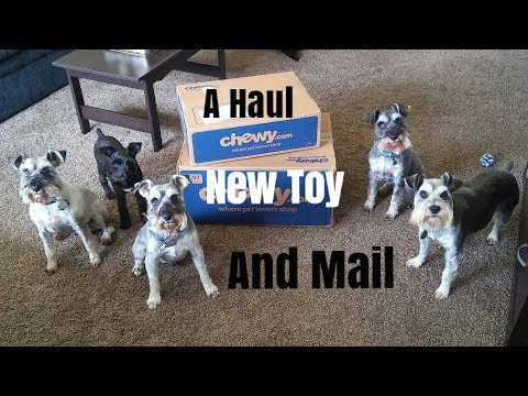 A Haul, A New Toy, and Mail | Schnauzer | Multiple Schnauzers