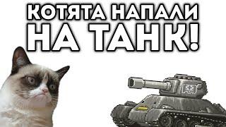 КОТЯТА НАПАЛИ НА ТАНК!