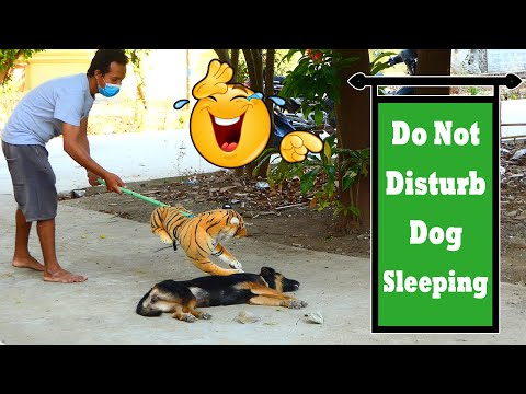 Best Fake Tiger Prank Vs Sleep Dog Really Funny Video _ 100% Try Not To Laugh New Prank Video