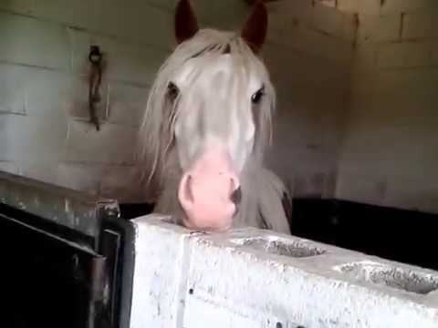 Funny horse fart - YouTube  |Funny Horse Farts