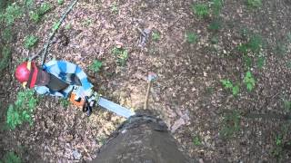 AmeriCorps St Louis Tree Felling - Birds Eye View with a GoPro