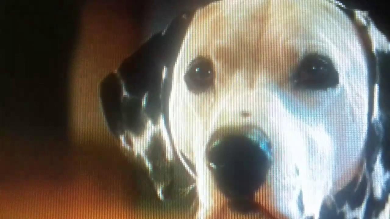 101 Dalmatians 1996 15 Puppies Youtube
