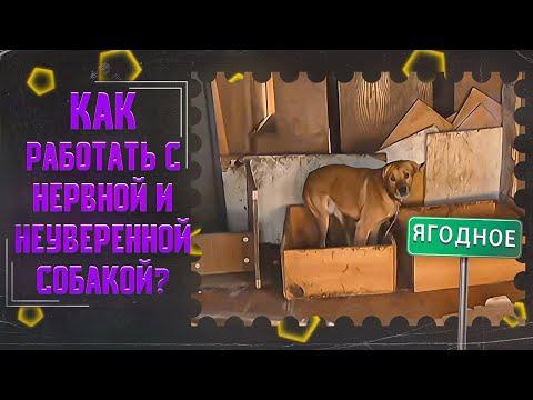 Вопрос: Антуан Наджарян какой породы у него собака Как зовут?