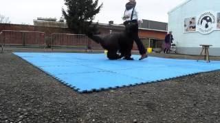 Baixar 20160305 Demo doggydance Mechelen Dierenbescherming Els en Bella