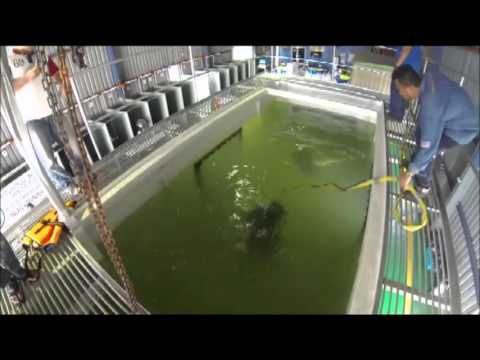 CAREFULL UNACCEPTABLE! Underwater Welding Training Center in
