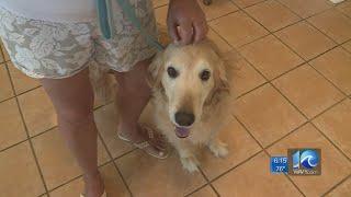 Local veterinarian: New Va. pet law is prescription for confusion