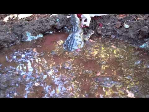 """Dinosaur Island S2 EP10 """"Under Water Battle"""""""