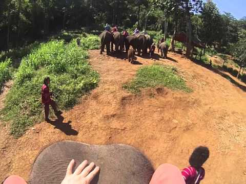 Elephant Ride to the River