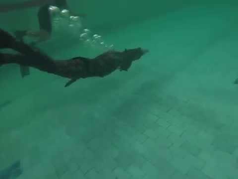 Как правильно плавать кролем? Описание и техника стиля