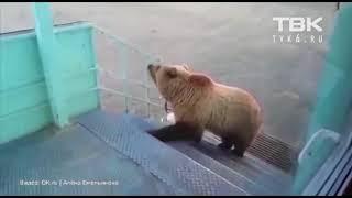 Борисыч-вахтовик прогнал медведя