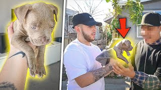I Bought a New Dog. *very emotional*