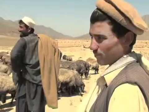 Afghan Kuchi Candidate