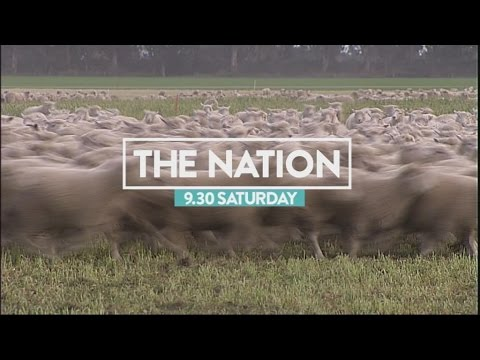 Saudi sheep: What grounds did Saudi investor have to sue NZ?