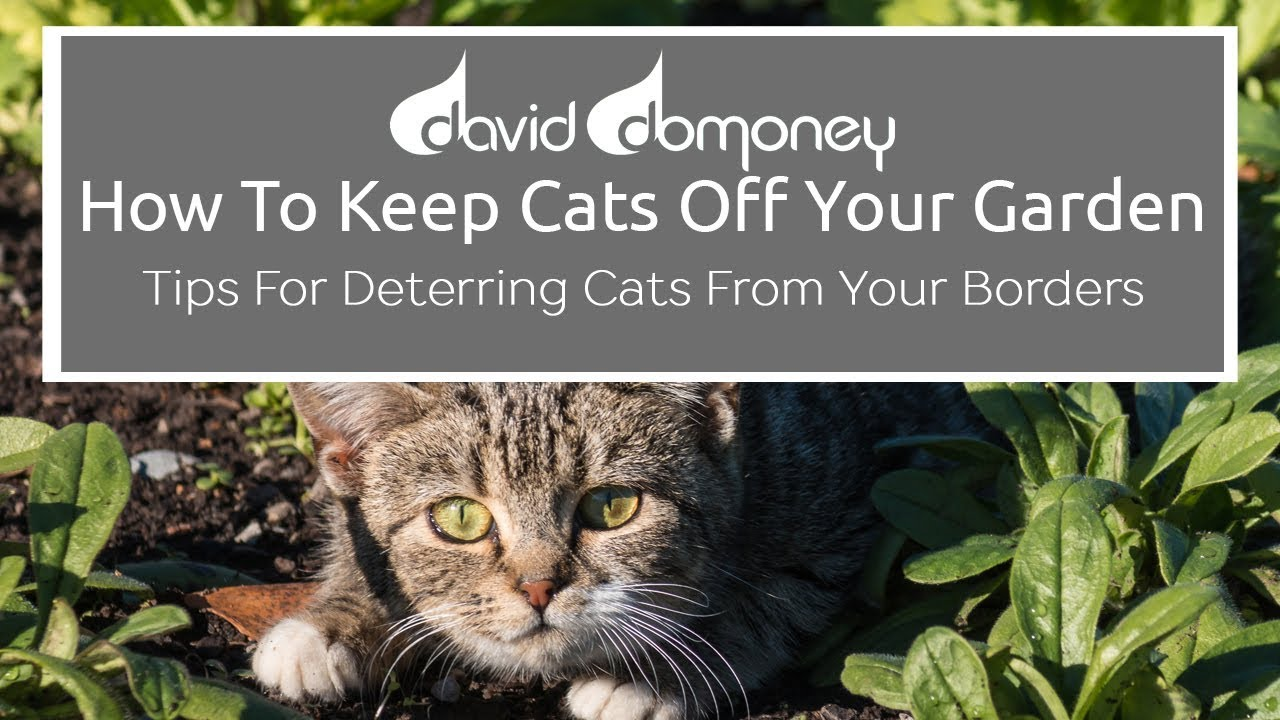 top tips for keeping cats off your garden youtube