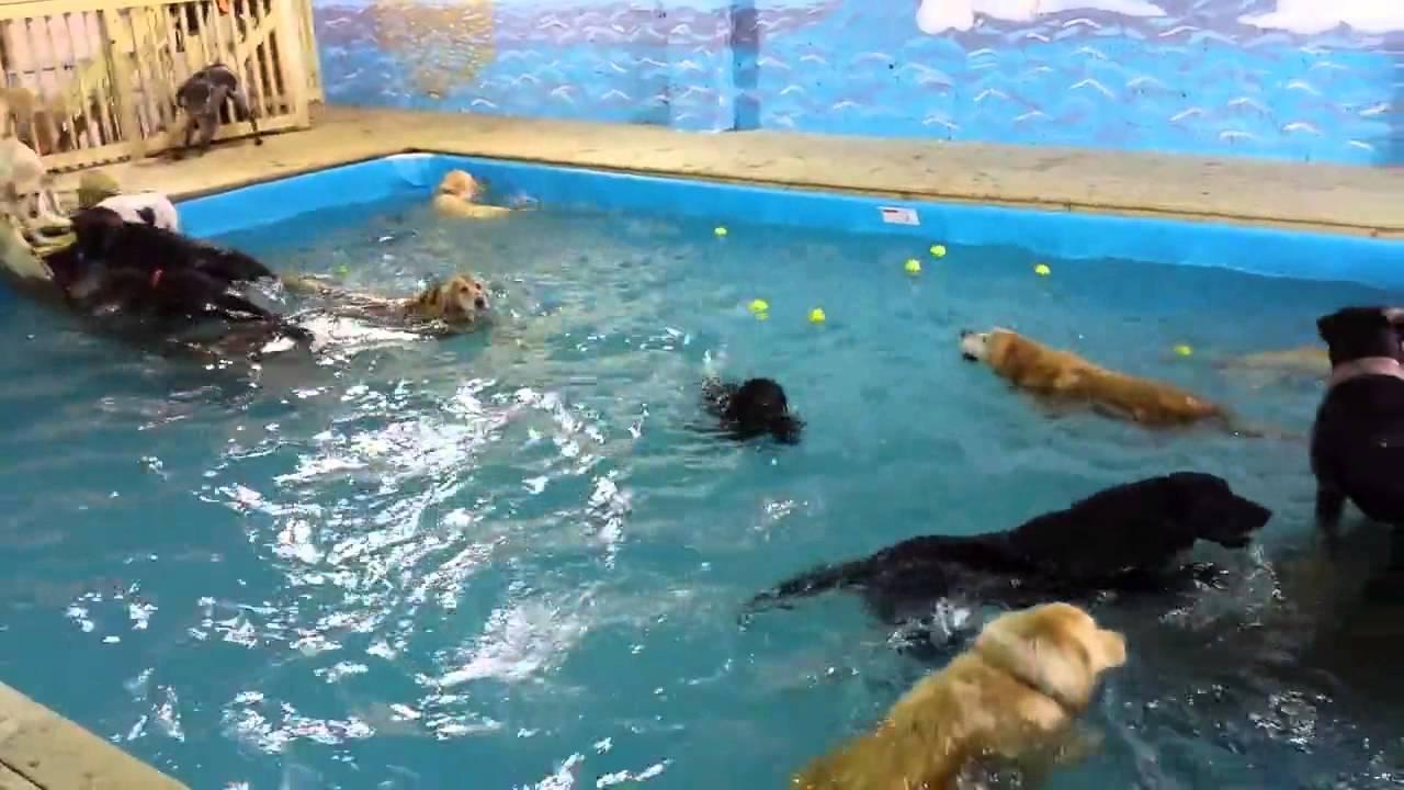 Cani che fanno il bagno in piscina youtube - Donne che fanno il bagno ...