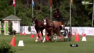 amy cross wins the usef pair pony driving national championship