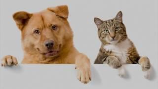 Умственные способности кошек и собак (рассказывают Наталия Ришина и Наталья Самойлова)
