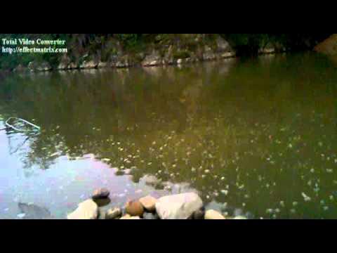 câu cá chép 7kg ở Tân Uyên, Lai Châu