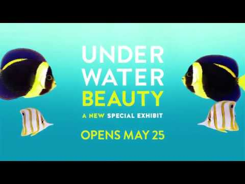 Underwater Beauty: Coming Soon to Shedd