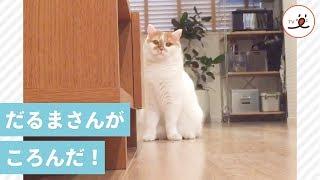 ニャンコは忍び寄る💕 愛猫と「だるまさんがころんだ」をしてみたら…【PECO TV】 thumbnail