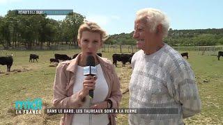 Dans le Gard, les taureaux sont à la ferme