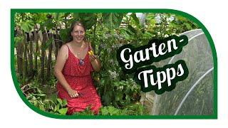 Gartentipps im Juli 🌱 Aussaat ab Juli 🌱 Garten Tipps was jetzt noch im Garten klappt