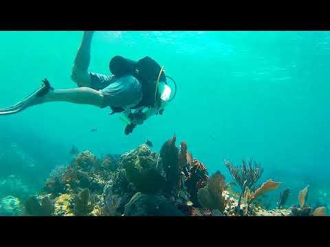 Molasses Reef 2017