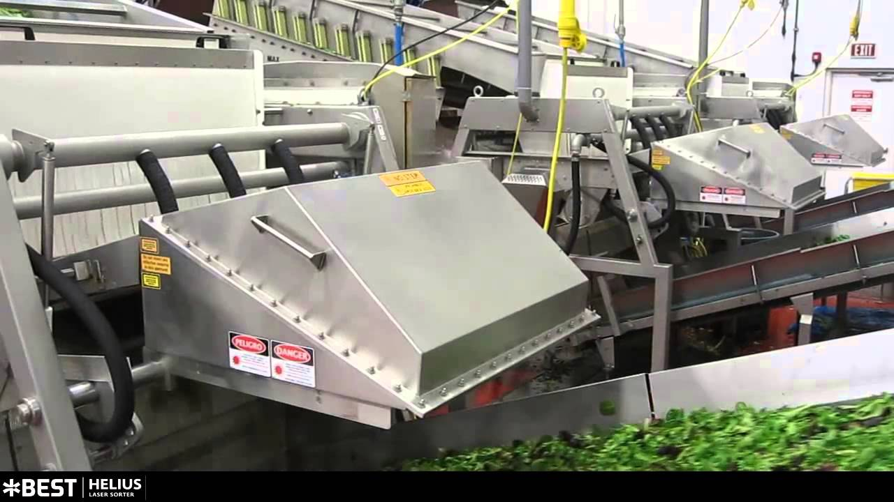 Baby leaf spinach spring mix sorter Helius - TOMRA Sorting