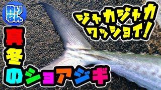 【満喫】寒くても釣れるよ♪真冬の堤防でショアジギング!