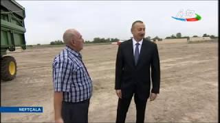 Neftcalada prezident İlham Eliyevin fermer Elihuseyn Haciyevle gorusu