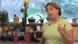 Flower Gardening Tips : How to Grow Daisies
