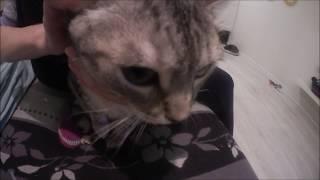 #766 Россия Санкт Петербург Сквика идет к врачу Ветеринарная клиника Лаки(, 2016-02-18T12:18:35.000Z)