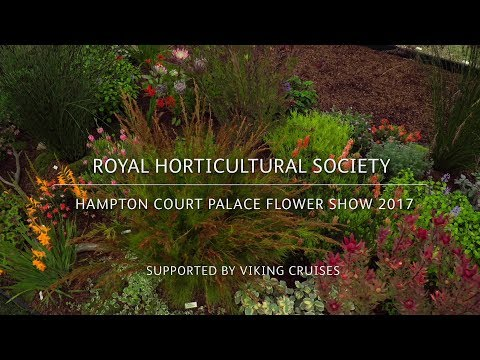 RHS Hampton Court Palace Flower Show 2017 | Penberth Plants | Plants for warmer climates