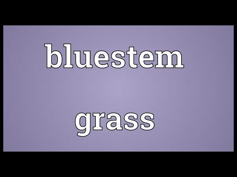 Bluestem grass Meaning