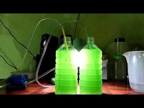 Cara Kultur Phytoplankton jenis spirulina