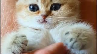 Самый красивый котенок, заставит плакать!