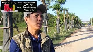 Ảnh 100 cây hoa sữa hồ Tây trồng gần bãi rác Nam Sơn giờ ra sao