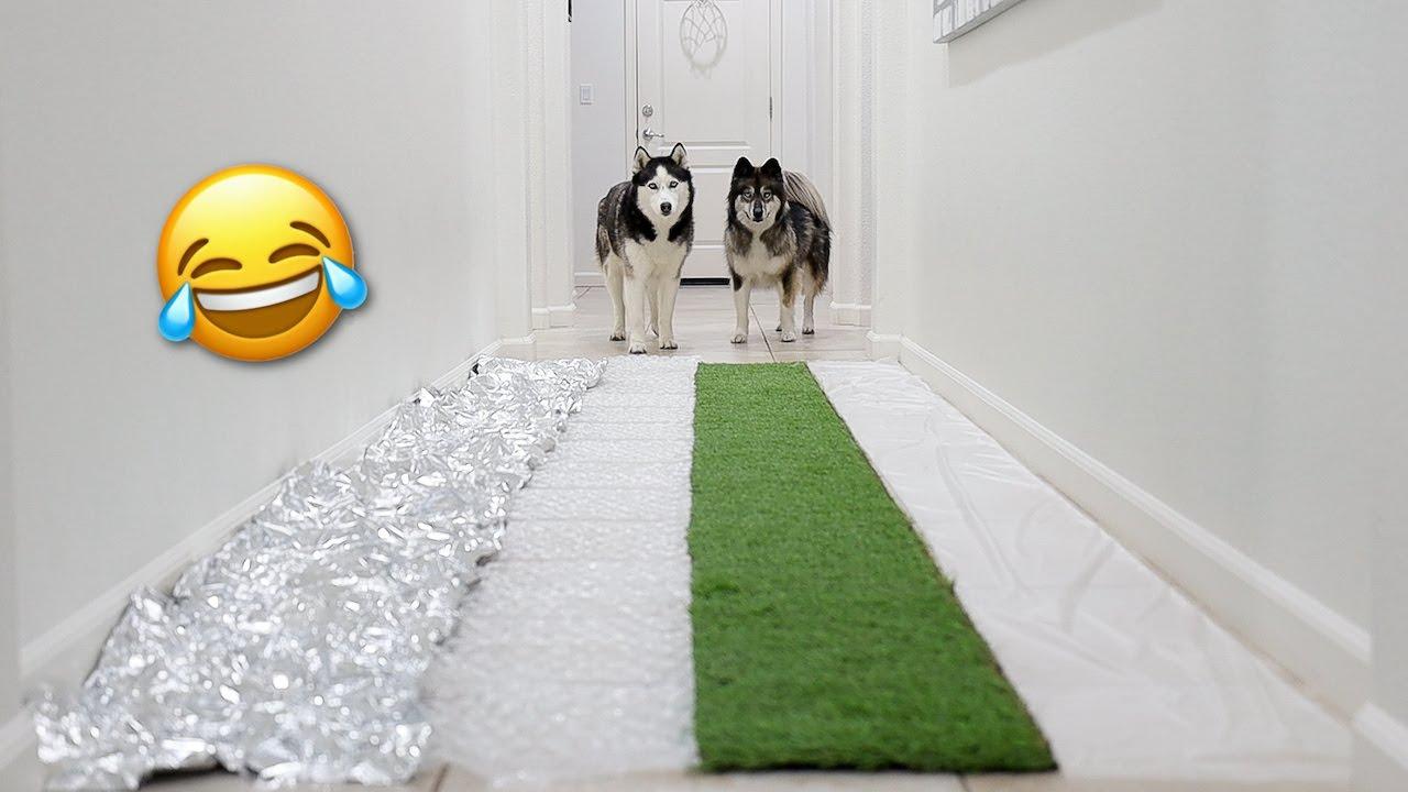 Changing Hallway Floors Prank On My Huskies!