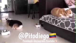 THE funny cats being gay