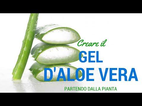 GEL D'ALOE FATTO IN CASA!!! ricetta facilissima PARTENDO DALLA PIANTA!