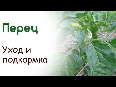 Сорт «Золотой юбилей» » Сладкий перец » Виды и сорта перца