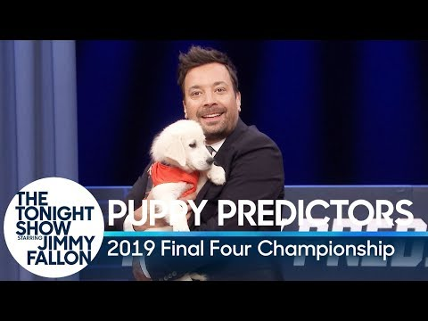 Phill Kross - Puppies Predict the 2019 Final Four Championship!
